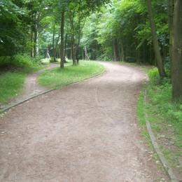lesní 015